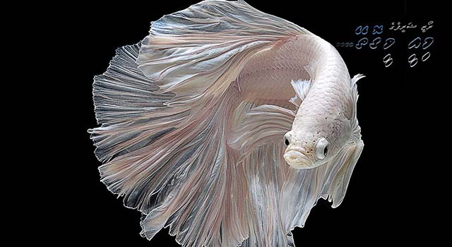 fish-1 (1)